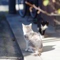 外飼いの猫が家に帰って来ない4つの理由とは?帰巣本能と探し方