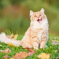 猫に枝豆を食べさせても大丈夫?正しい与え方や注意点とは