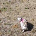 【涙腺崩壊】猫ちゃんが大好きだった場所の最期
