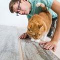 猫と暮らす家づくりポイントや自分で出来る事