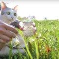 ポカポカ陽気♡タンポポの綿毛を探しに猫ちゃんとお散歩♡