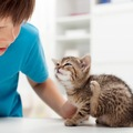 猫の疥癬はとても痒くて辛い!早めの治療を!