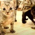 ノミだらけで保護した子猫ちゃんたちの成長記録