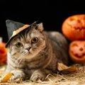 「季節の変わり目」シニア猫に配慮したいこと5つ