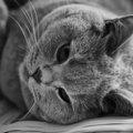 猫のてんかんってどんな病気?原因や症状から予防まで