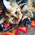 水川あさみは猫大好き!名前や品種、エピソードの紹介など