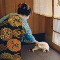 「ねこの京都」はどんな写真展?コンセプトやグッズ