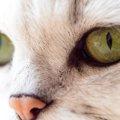 猫が涙目になった時の、4つの病気の可能性
