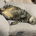 猫が飼い主の座る場所を占領する7つの心理