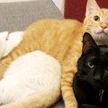お兄さん猫達のお世話で幸せ満喫中!家族写真風が大反響だったトリオ…