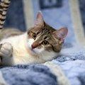 五体不満足の猫ちゃんと暮らすということ