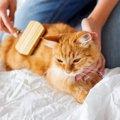 部屋が猫の毛だらけにならないようにできる対策!おすすめのグッズも…