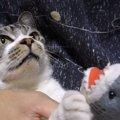 猫喰いザメが現れた!リキちゃん迫真の演技を披露する