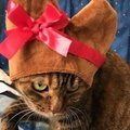 『麦わら猫』ってどんな猫?性格や特徴、飼う時の注意点5つ