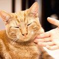 撫でると嫌がる猫と触れ合う方法は?拒否される理由や撫で方の動画を…