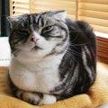 刃物で切られ瀕死の状態で保護…亡き両親の遺したスーパーサバイバル猫