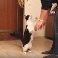 スーパーマンのポーズ!?抱っこされる瞬間に変なポーズをする猫さん