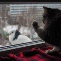 猫のクラッキングとは?「カカカ」という鳴き声と鳴く意味