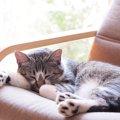 猫がいても大丈夫なソファはある?4つの特徴