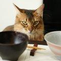 可愛い猫の箸置き!おすすめの商品7選