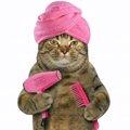 お風呂上がりの猫を早く乾かす5つのテク