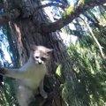 なぜ…木の上で立ち往生の猫は救助者に激おこ!何度も噛む&パンチ