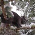 極寒の木の上に残された猫…危険な救出活動の結末は?