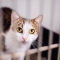 猫の捕獲器をレンタルする方法と注意点、貸出している所