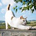 長い猫たち6連発!猫の身体が伸びる理由とは