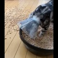 【話題】猫トイレ掃除中に起きた悲惨すぎる事件に一同大絶叫!