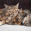 猫団子になって眠る理由と作り方