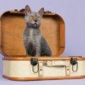 ライコイ(リコイ・リュコイ)ってどんな猫?特徴や性格について