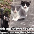 生まれてまだ数週間の子猫3兄弟をレスキュー!