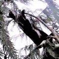 救助中に2度も木から落下したミリーをレスキュー