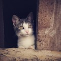 野良猫が屋根裏に入り込んでしまう3つの理由
