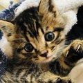 人間が子猫を可愛いと感じるのは科学的な根拠があった!