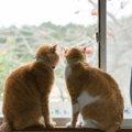 『賃貸物件』で猫が飼いにくい理由と気をつけること