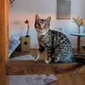 猫のウォールステッカーを使ったおしゃれなお部屋