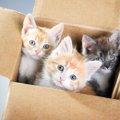 子猫を保護した時にまずやるべき事と6つのポイント