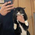目が離せない!2ショット写真の超個性派猫の魅力に悶絶する人続出