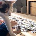 「ねぇ~何してるニャ?」猫ちゃんとジグソーパズルをしたらこうなった