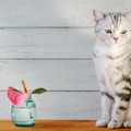 猫に精油(エッセンシャルオイル・アロマオイル)は危険!理由と種類