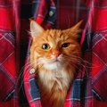 猫が『服の中に入りたがる』5つの理由