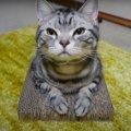 枠がなくても大丈夫!爪とぎから離れない猫ちゃん