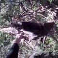 厳冬に猫が木の上で立ち往生!決死の救出で飼い主の元へ