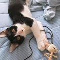 猫が寝ながらご飯を食べる理由と注意点