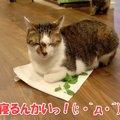 キャットニップを前に猫さんたちはどうする?