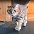 新型コロナの自粛中、猫たちだって自宅で運動!…やる気にはばらつきア…