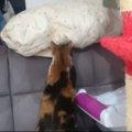 「自分のことは自分でできるニャ♪」自らお布団を用意する猫ちゃん!