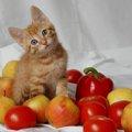 猫にフルーツ!食べても良い物・危険な物